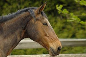 Paarden Kita